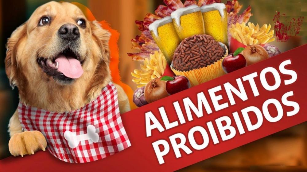 10 alimentos proibidos para cachorro
