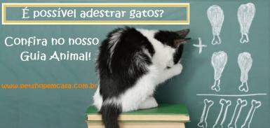 Adestramento de Gatos – Já viram?